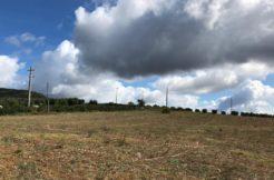 Vendita di progetto per costruire 2 casali e annessi per 1.000 mq su terreno di 14 ha. Capalbio