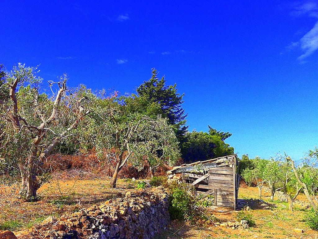 Vendita terreno agricolo di 1.000 metri, con piccolo annesso di 20 Mq, Porto Santo Stefano