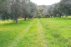 Vendita terreno agricolo di circa 4.000 mq con magazzino di 20 mq. Poco distante dal centro, facile accesso. Vigna, olivi. Porto Ercole
